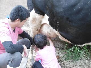 滝沢牧場の乳搾り体験 �B.JPG
